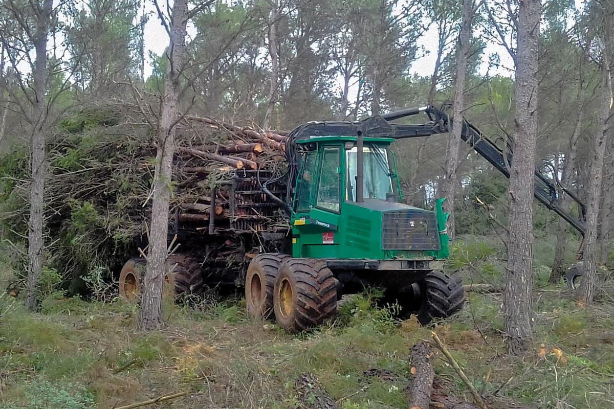 forestal-1
